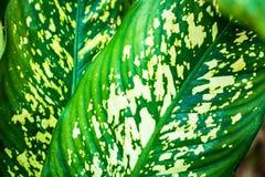 Aislante verde de la hoja del tono en blackground en sumer sping fotografía de archivo
