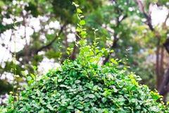 Aislante verde de la hoja del tono en fondo en verano de la primavera Imagen de archivo libre de regalías