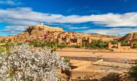 Ait Benhaddou och fruktträdblomningar - Marocko Royaltyfri Bild