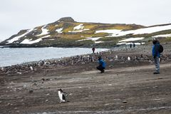 A group of tourist watching the wildlife amidst a breeding colony of gentoo penguins Pygoscelis papua, Antarctica Royalty Free Stock Photos