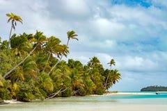 Coconut tree on Polynesia beach Wonderful lagoon Royalty Free Stock Image