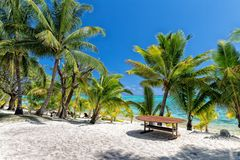 Coconut tree on Polynesia beach Wonderful lagoon Stock Photos