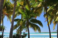 Aitutaki plaża, piasek i drzewka palmowe, Zdjęcie Royalty Free