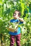 Aiutando con il raccolto Immagine Stock Libera da Diritti