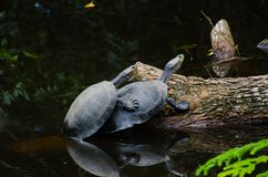 Aiutimi tartaruga fotografie stock libere da diritti
