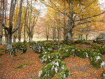 Aizkorri, Baskijski kraj obraz stock