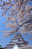 Aizuwakamatsu Castle and cherry blossom Royalty Free Stock Image