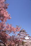 Aizuwakamatsu Castle and cherry blossom Stock Images
