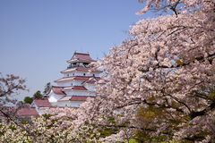 Aizuwakamatsu Castle and cherry blossom Royalty Free Stock Images