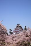 Aizuwakamatsu Castle and cherry blossom Stock Photography