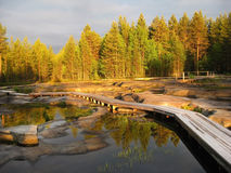 Ajardina a água da floresta da terra do céu Fotografia de Stock Royalty Free