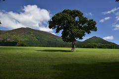 Ajardina el árbol Fotografía de archivo