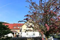 Ajardina em uma cidade, Francoforte, Alemanha Fotos de Stock