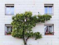 Ajardina em uma cidade, Francoforte, Alemanha Fotografia de Stock