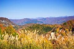 Ajardina a floresta do outono Fotografia de Stock