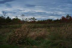 Ajardina a foto da grama e dos arbustos com obscuridade - céu nebuloso azul na queda fotos de stock royalty free