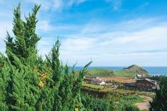 Ajardina a ilha de Jeju da natureza em Coreia Imagens de Stock Royalty Free