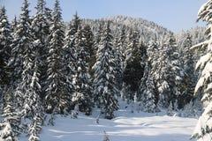 Ajardina o canadense Vancôver do pico de montanha Fotos de Stock