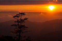 Ajardina o nascer do sol da montanha da manhã entre a silhueta das árvores Fotografia de Stock