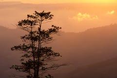 Ajardina o nascer do sol da montanha da manhã entre a silhueta das árvores Imagens de Stock Royalty Free