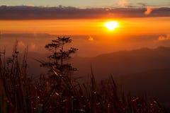 Ajardina o nascer do sol da montanha da manhã entre a silhueta das árvores Foto de Stock