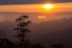 Ajardina o nascer do sol da montanha da manhã entre a silhueta das árvores Imagens de Stock