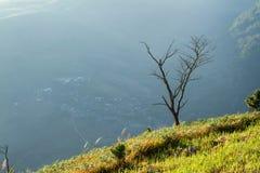 Ajardina o nascer do sol da montanha da manhã entre a silhueta das árvores Imagem de Stock