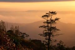 Ajardina o nascer do sol da montanha da manhã entre a silhueta das árvores Fotos de Stock