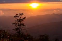 Ajardina o nascer do sol da montanha da manhã entre a silhueta das árvores Fotos de Stock Royalty Free