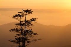 Ajardina o nascer do sol da montanha da manhã entre a silhueta das árvores Fotografia de Stock Royalty Free
