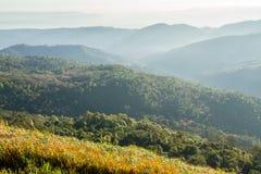 Ajardina o nascer do sol da montanha da manhã entre a silhueta das árvores Foto de Stock Royalty Free