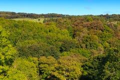 Ajardina a vista das árvores Foto de Stock