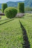 Ajardinando árvores Fotografia de Stock Royalty Free