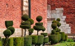 Ajardinando as árvores no dia ensolarado Imagem de Stock Royalty Free