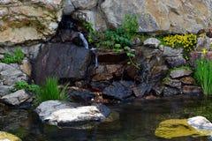 Ajardinando a lagoa Imagem de Stock