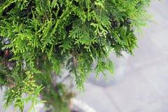 Ajardinando no shopping, arbustos, árvores em um suporte concreto Ajardinar do desenhista da paisagem Fotos de Stock