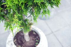 Ajardinando no shopping, arbustos, árvores em um suporte concreto Ajardinar do desenhista da paisagem Imagens de Stock