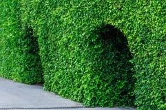 Ajardinando o parque aparado das árvores em público Fotografia de Stock Royalty Free