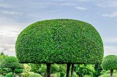 Ajardinando o parque aparado das árvores em público Imagens de Stock