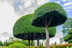 Ajardinando o parque aparado das árvores em público Foto de Stock Royalty Free
