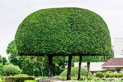 Ajardinando o parque aparado das árvores em público Fotos de Stock