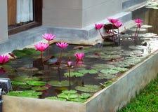 Ajardinando o projeto e a plantação de um lote da jarda perto da casa - lotu Fotografia de Stock Royalty Free