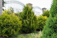 Ajardinando, serviços de jardinagem Focalize no primeiro plano, fundo macio com copyspace Foto de Stock