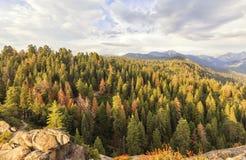 Ajardinando a vista de Moro Rocks, EUA Imagens de Stock