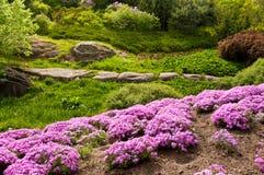 Ajardinar bonito com flores bonitas Fotografia de Stock Royalty Free