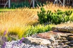 Ajardinar bonito com plantas bonitas Foto de Stock Royalty Free