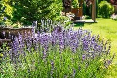 Ajardinar bonito com plantas bonitas Imagens de Stock