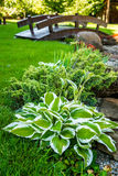 Ajardinar bonito com plantas bonitas Fotografia de Stock