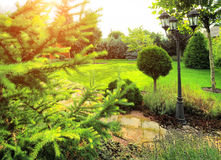 Ajardinar bonito com plantas bonitas Fotos de Stock