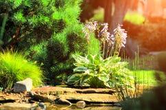 Ajardinar bonito com plantas bonitas Fotografia de Stock Royalty Free